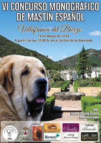 Foto de VI Concurso Monográfico de Mastín Español