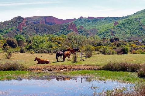 Foto de Villafranca del Bierzo acogerá un curso para descubrir el Patrimonio Natural del Bierzo